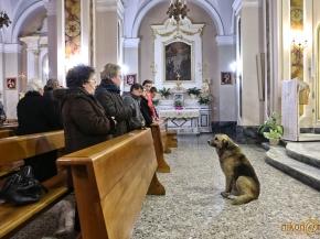 Perro que visita regularmente la iglesia donde iva su dueña-