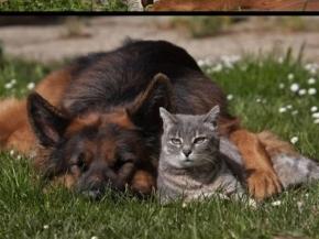 Amistad entre gato y perro